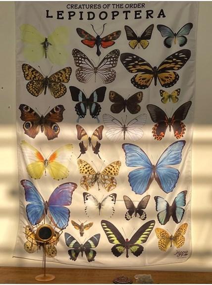 Panô Hippie Lepidoptera
